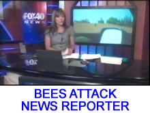 Reporter Attacked by Bees